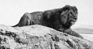DIA- LION algerie