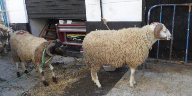 dia-mouton-aid-2