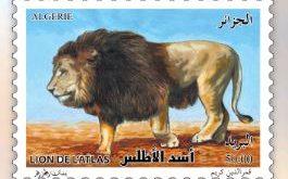 dia-le-lion-de-latlas