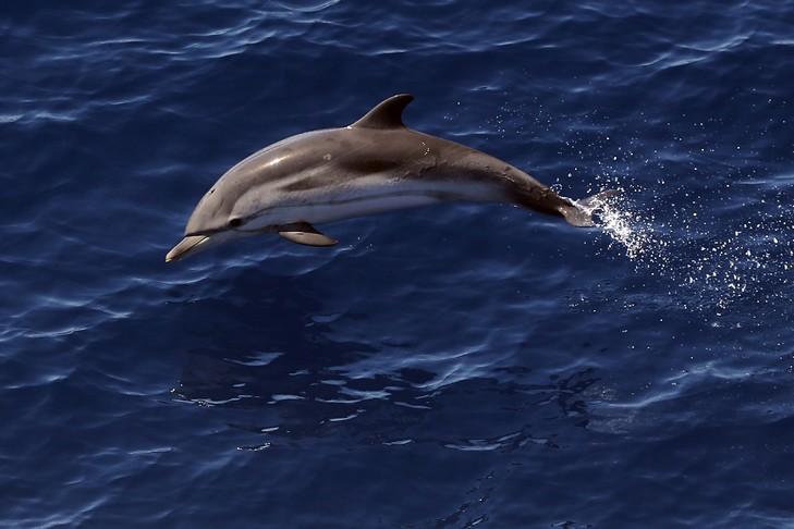 DIA-massacre dauphin